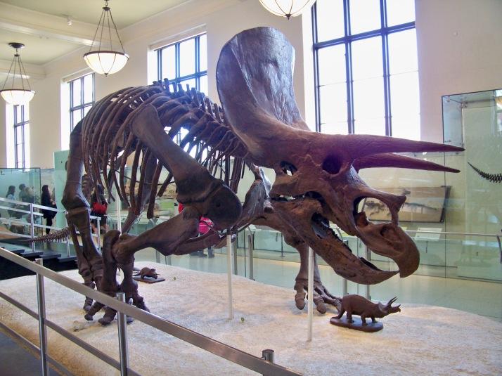 Natural History 13