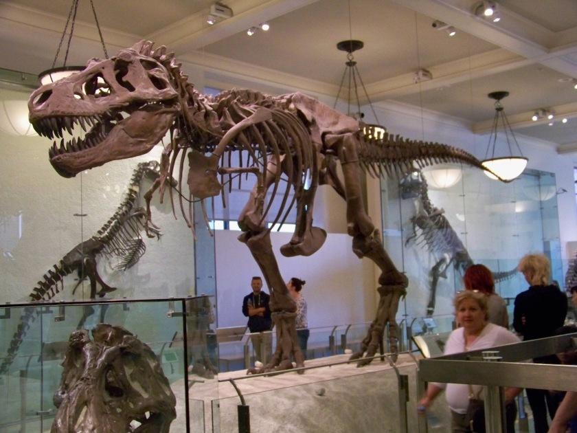 Natural History 4