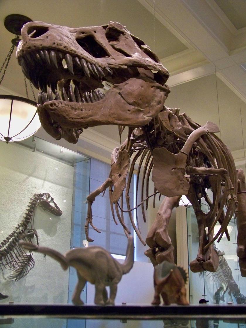 Natural History 5