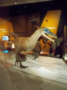 Natural History 9