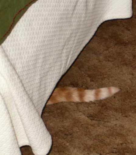 Mote Tail